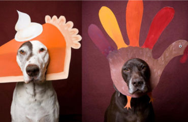 Dogs with Thanksgiving costumes